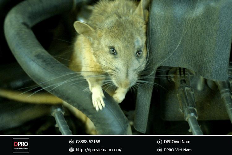 chuột-xuất-hiện-trong-khoang-máy