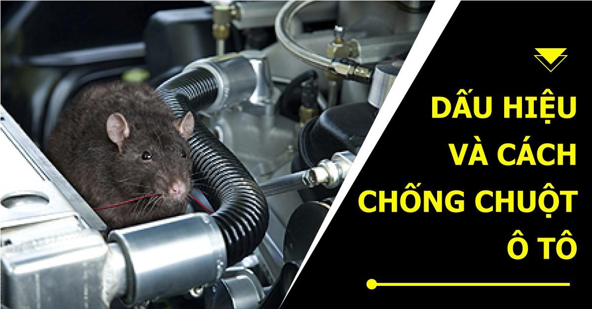 Kinh nghiệm chống chuột ô tô – Không phải ai cũng biết